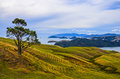 Rural landscape new zealand at the coast of Stock Photo