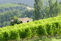 Rural landscape old stone house surrounded by vineyards Stock Photography