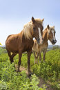 Rural landscape with a pair of horses Royalty Free Stock Photo