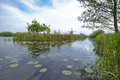 Rural landscape peaceful countryside on the channels of kinderdijk the netehrlands Stock Images