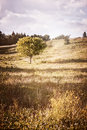 Rural landscape with single tree summer of countryside on warm afternoon ontario canada Royalty Free Stock Photos