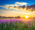 Rural landscape with sunrise and blossoming meadow Royalty Free Stock Photo