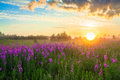 Rural landscape with the sunrise a blossoming meadow and fog beautiful Royalty Free Stock Photo