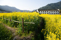Rural landscape in wuyuan county jiangxi province china with rape flowers all around taken Royalty Free Stock Photo