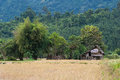 Rural laos panoramic view of rice field and green hills beautiful nature of lao Royalty Free Stock Photo