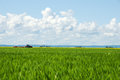 Rural life landscape focus on red tractor green wheat field front and yellow canola field with sky Stock Image