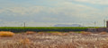 Rural mallorca corn field on island spain Stock Image