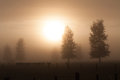 Rural morning fog Royalty Free Stock Photo