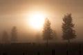 Rural morning fog Royalty Free Stock Photo