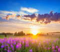 Rural panorama landscape with sunrise and blossoming meadow Royalty Free Stock Photo