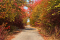 Rural paved road among autumn trees Royalty Free Stock Photo