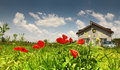 Rural residence with poppies and blue sky Stock Image