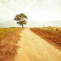 Rural road leading to the tree