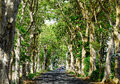 Rural road with many green trees Royalty Free Stock Photo