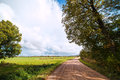 Rural road in summertime. Royalty Free Stock Image