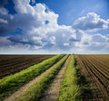 Rural road trough fields Royalty Free Stock Photo