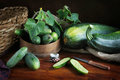 Rural still life with fresh cucumbers green Stock Photography