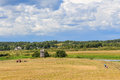Rural summer landscape with field Royalty Free Stock Photo