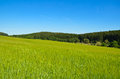 Rural summer landscape with field and forest on skyline grass Royalty Free Stock Photos