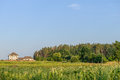 Rural summer landscape with pine forest on the horizon Royalty Free Stock Images