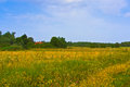 Rural summer landscape. Typical european pastoral meadow, pasture, field. Illustration of agriculture Royalty Free Stock Photo