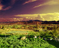 Rural sunset dreamscape landscape green grass trees and dramatic sky Stock Photos