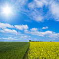Rural symmetry three colors built by cultivated symmetric fields an sky Stock Photography