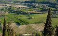 Rural tuscany ws italy landscapes wine vineyards olive groves green and blue Stock Images