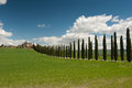 Rural tuscany ws italy landscapes wine vineyards olive groves green and blue Royalty Free Stock Image