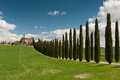 Rural tuscany ws italy landscapes wine vineyards olive groves green and blue conifer cypress trees Stock Image
