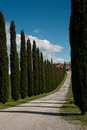 Rural tuscany ws italy landscapes wine vineyards olive groves green and blue conifer cypress trees Stock Photo