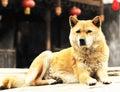 Rural watchdog Stock Photography