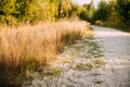Rural White Sandy Road Going Ahead Along The Growing Yellow Thick Grass Royalty Free Stock Photo