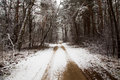The rural winter road Royalty Free Stock Photo