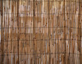 Rush bamboo pattern Royalty Free Stock Photography