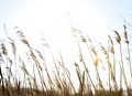 Rush on defocus with sun rays Royalty Free Stock Photo