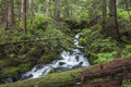 Rushing cascade in forest beautiful waterfall rushes downstream along the herring cove trail a dense near sitka alaska Stock Images