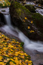 Rushing water and golden leaves slow shutters shot of down between fallen covered rocks Royalty Free Stock Photo