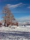 Russia Siberia The North Of Bu...