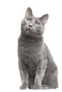 Russian blue cat with green eyes sitting on isolated white Royalty Free Stock Photos