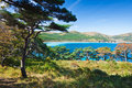 Russian primorye coastline flora Royalty Free Stock Photo