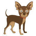 Russian toy terrier illustration of cute Stock Images