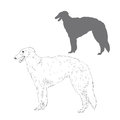 Russian wolfhound illustration.