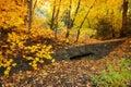 Rustic Autumn Scene