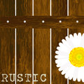 Rustic background with fence and daisy
