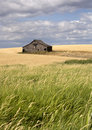 Rustic barn in the farmland. Stock Photo