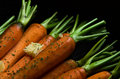 Rustic carrotts image of carrots with butter and herbs Stock Photography