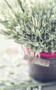 Rustic Christmas bouquet Royalty Free Stock Photo