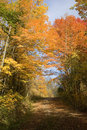 Rustic Dirt Road in Autumn Royalty Free Stock Photo