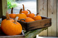 Rustic fall  pumpkins in boxes Royalty Free Stock Photo